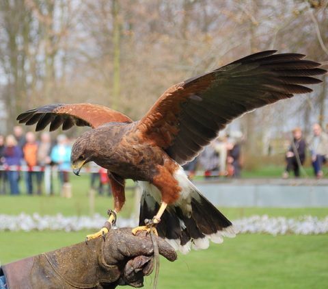 Falconry Hire
